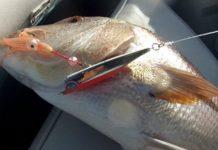 pesca con inchiku
